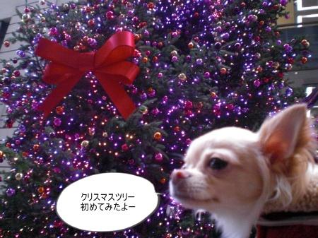 new_CIMG4637_20121109151233.jpg