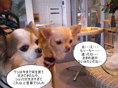 new_CIMG4655.jpg