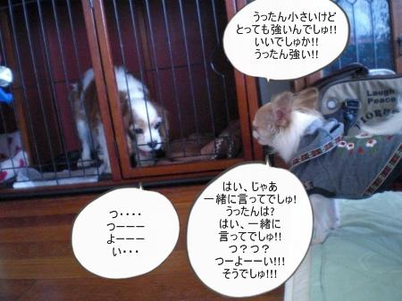 new_CIMG4766_20121127165054.jpg