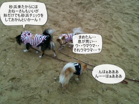 new_new_447.jpg