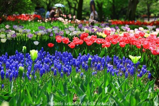 cantik1_20120429093620.jpg
