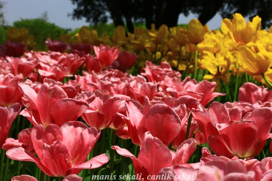 cantik2_20120429093619.jpg