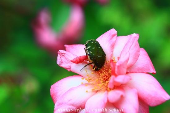 cantik2_20120528074129.jpg