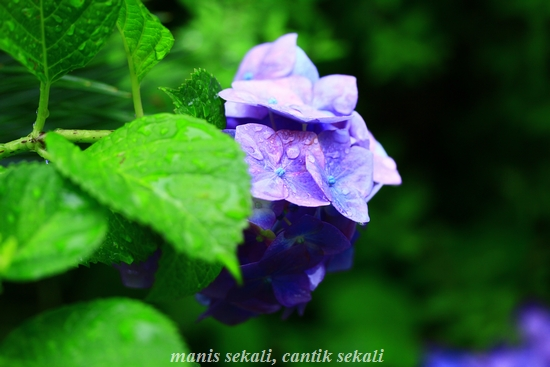 cantik2_20120628073743.jpg