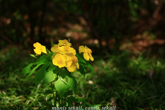 cantik2_20120709080449.jpg