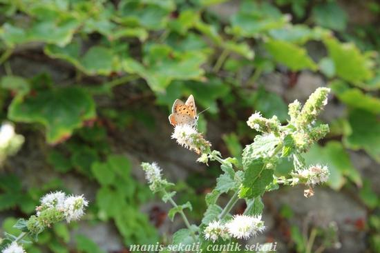 cantik2_20120922091147.jpg