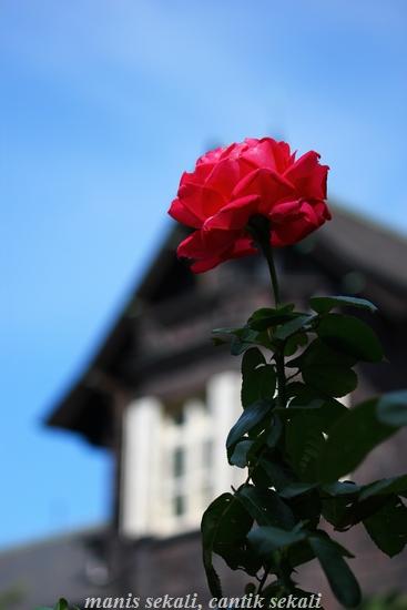 cantik2_20121022073541.jpg