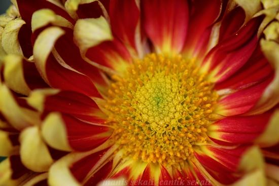 cantik2_20121129225456.jpg