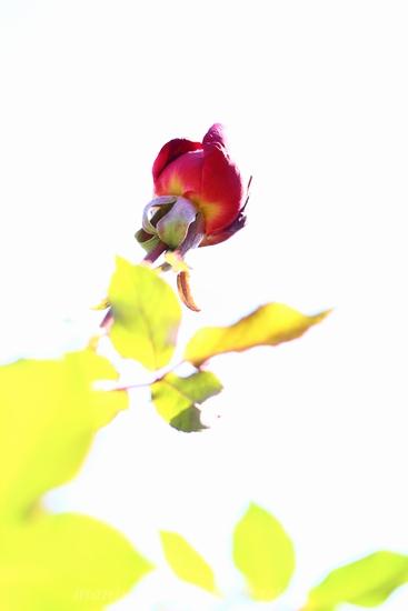 cantik2_20130107075007.jpg