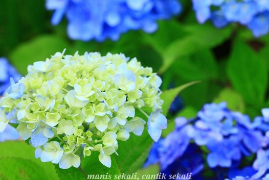 cantik3_20120704073506.jpg