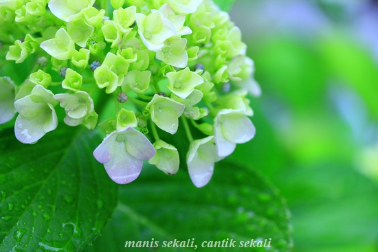 cantik4_20120627073250.jpg