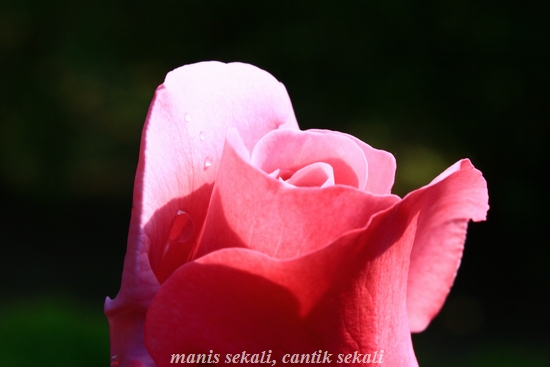 cantik5_20120529072819.jpg