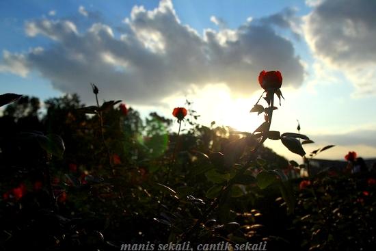cantik5_20121119073652.jpg