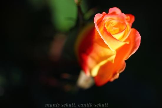 cantik6_20121214075702.jpg