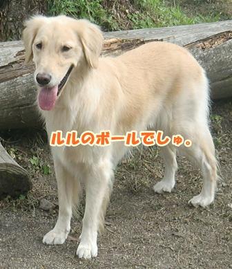 CIMG2800森の国-1