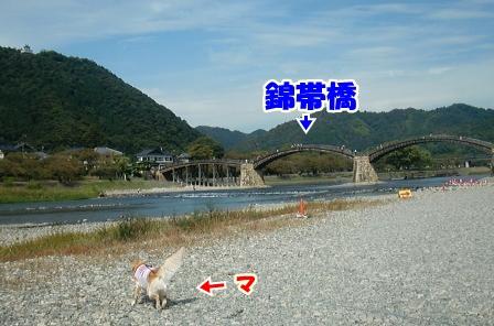 CIMG3102錦帯橋ー1