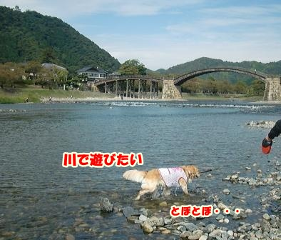 CIMG3107錦帯橋-1
