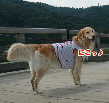 CIMG3130錦帯橋-1