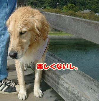 CIMG3153錦帯橋-1