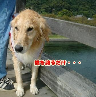 CIMG3152錦帯橋-1