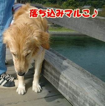 CIMG3154錦帯橋-1