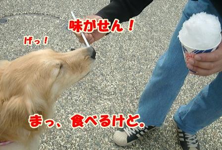 CIMG3177錦帯橋-1