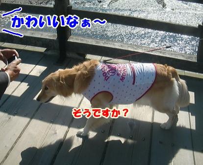 CIMG3234錦帯橋-1
