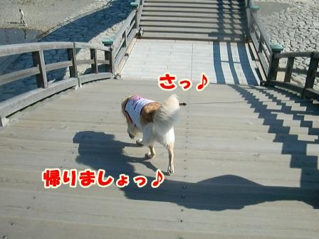 CIMG3235錦帯橋-1