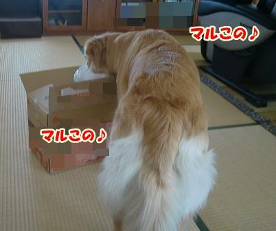 CIMG3419お届け物♪-1