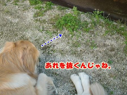 CIMG3497草むしり-1
