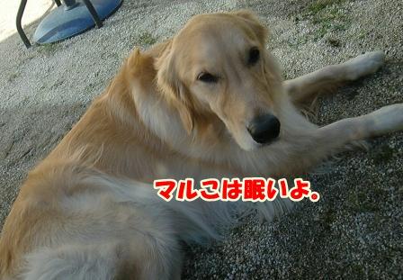 CIMG3501草むしり-1