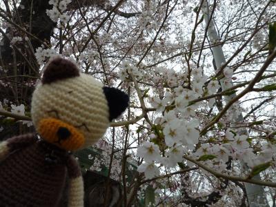 桜と編みねこ・モカ