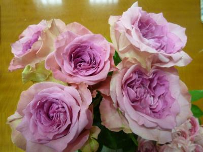ピンク二色のバラ