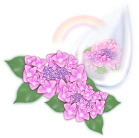 挿絵・紫陽花ピンク