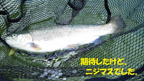 120801_PIC010.jpg