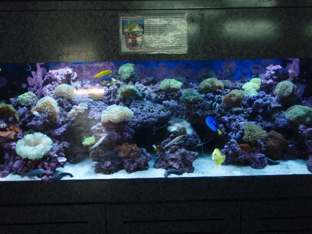 displaytank in store