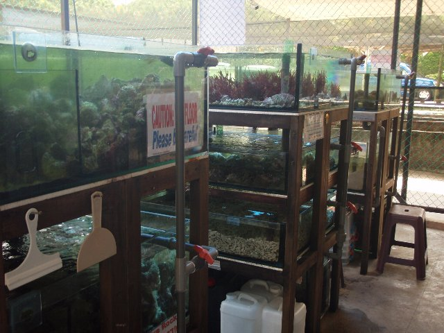 store tank with algae