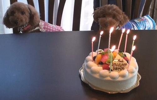 ナナ姫&ハチ公&ケーキ