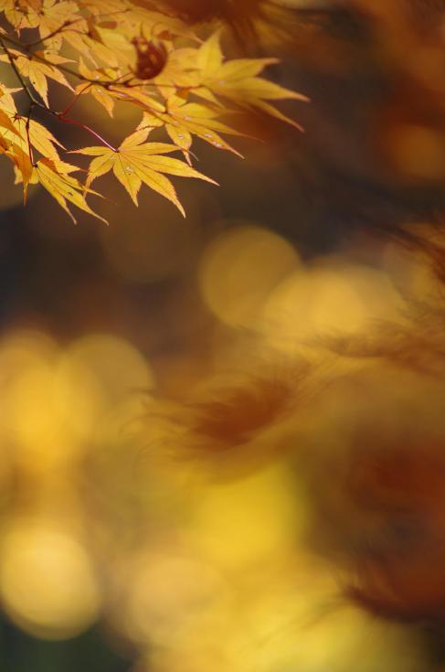 11_20121117195856.jpg