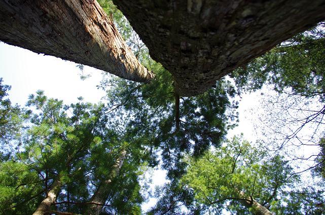 10巨木の迫力