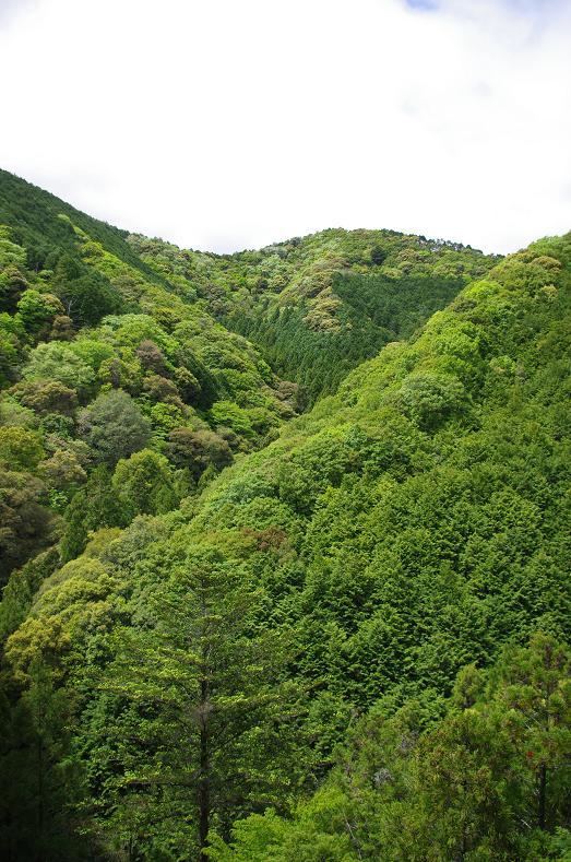 11新緑の山々