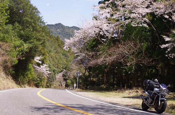 5桜舞う阿波サンライン