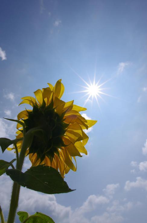9太陽を目指して