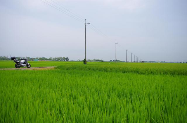 3 田園とBandit