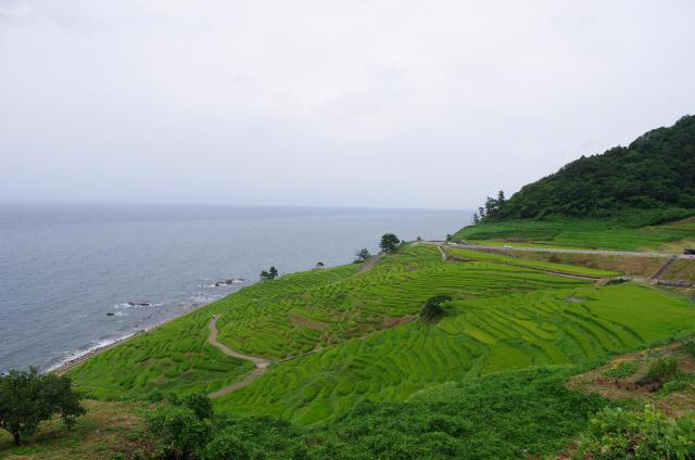 11日本海と千枚田
