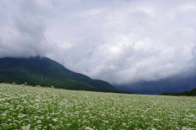 13戸隠山と蕎麦畑