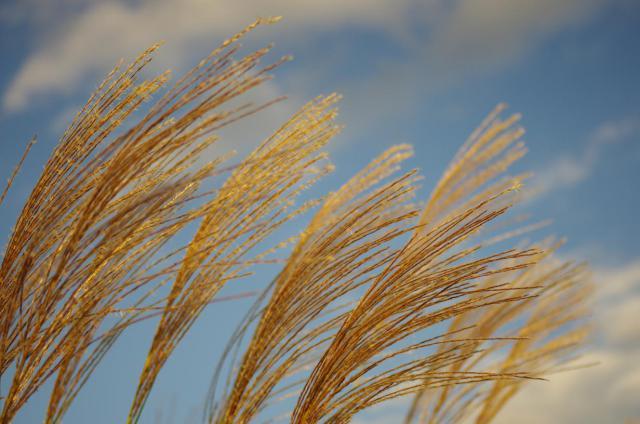 18ススキと秋の空