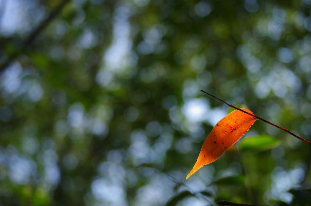 14色付く木の葉