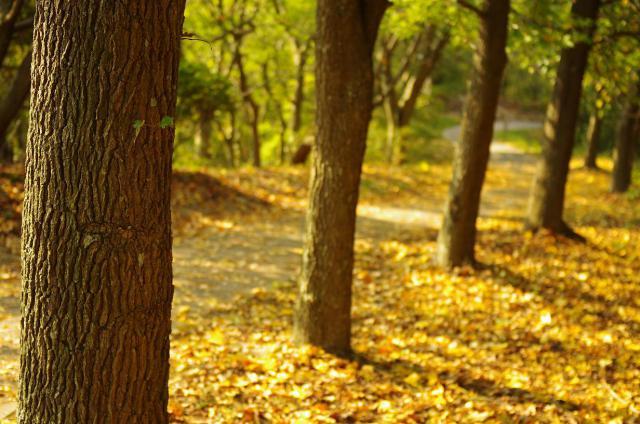 15黄色の遊歩道
