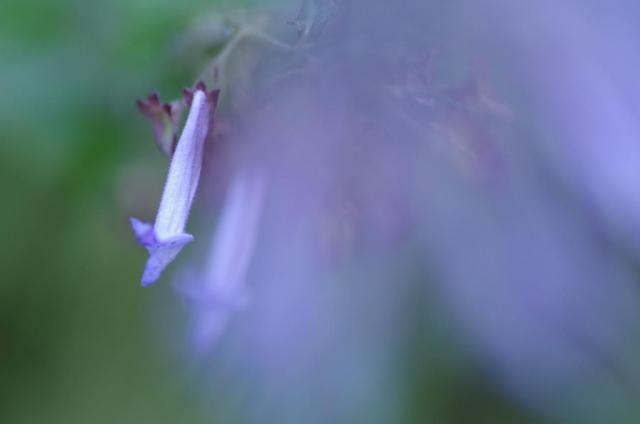 7紫のベール
